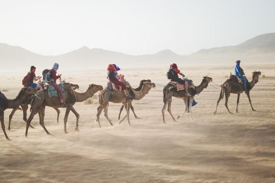 Kilkoro ludzi jadących na wielbłądach przez pustynię ubezpieczenia-lodz.com